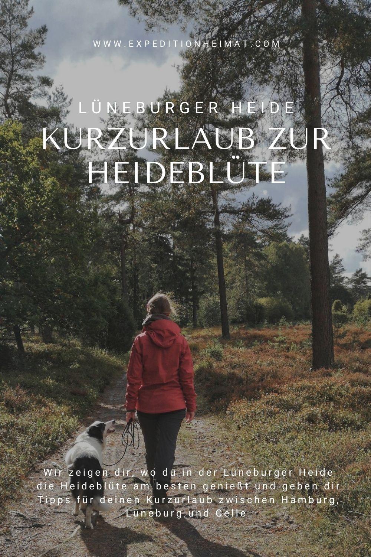 Kurzurlaub in der Lüneburger Heide zur Blütezeit