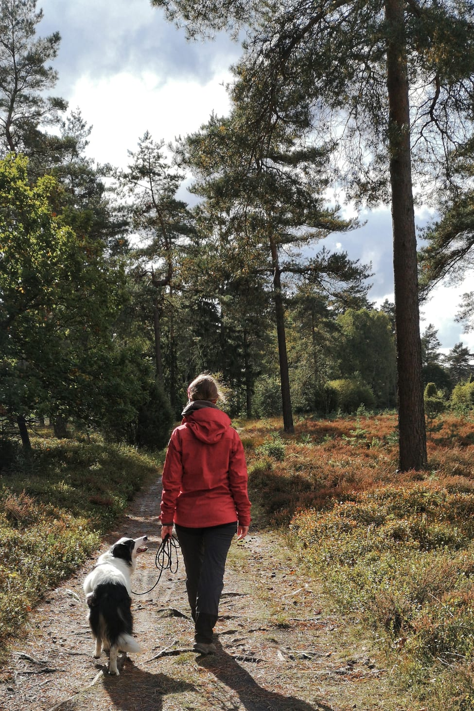 Kurzlurlaub in der Lüneburger Heide zur Blütezeit