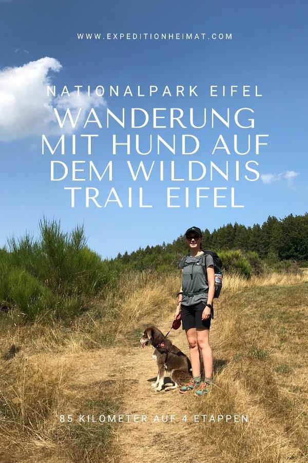 Selbstversuch: Weitwanderung mit Hund auf dem Wildnis-Trail im Nationalpark Eifel
